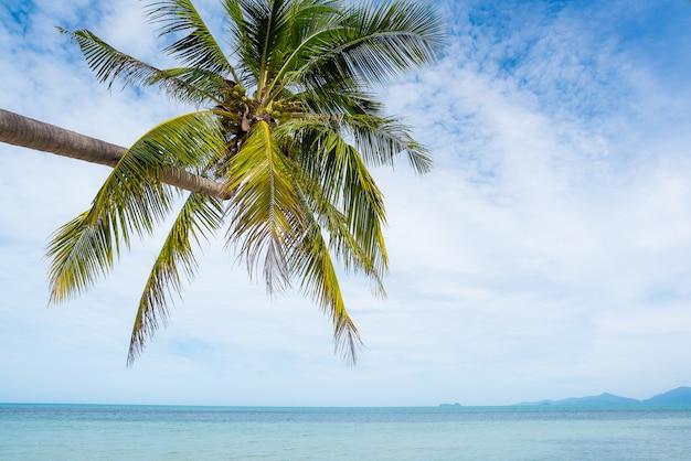 Kokospalmen erstrecken sich ins meer. bild des tropischen strandes, feiertag, ferien, erholungskonzept