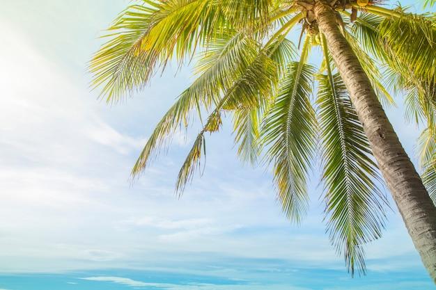 Kokospalmen gegen blauen himmel an der tropischen strandküste