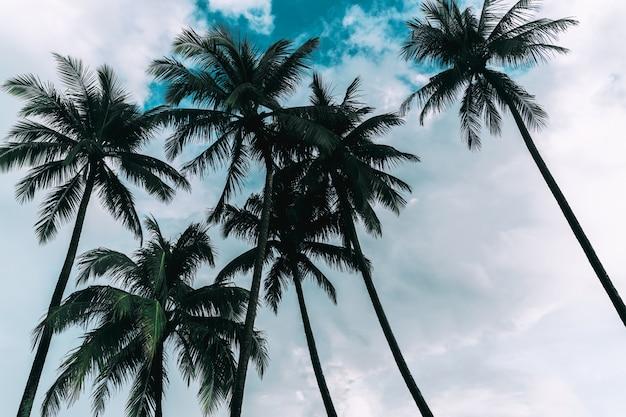 Kokospalmen gegen himmel und weiße wolke in tropischer insel.