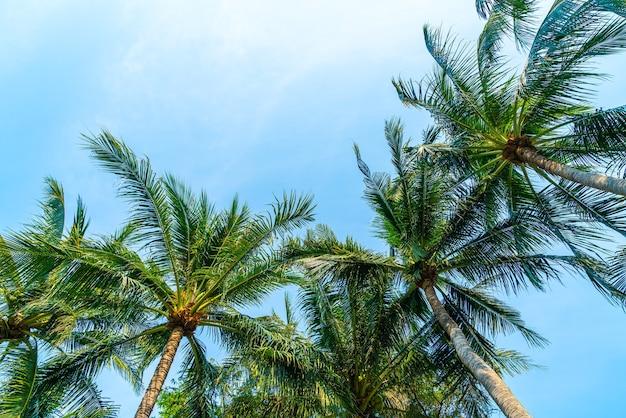 Kokospalmen mit blauem himmel