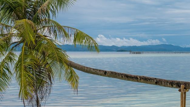 Kokospalmen nahe tauchstation auf kri-insel, raja ampat, indonesien, west-papua.
