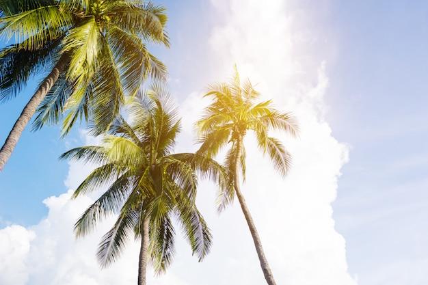 Kokospalmen, schöne tropische landschaft