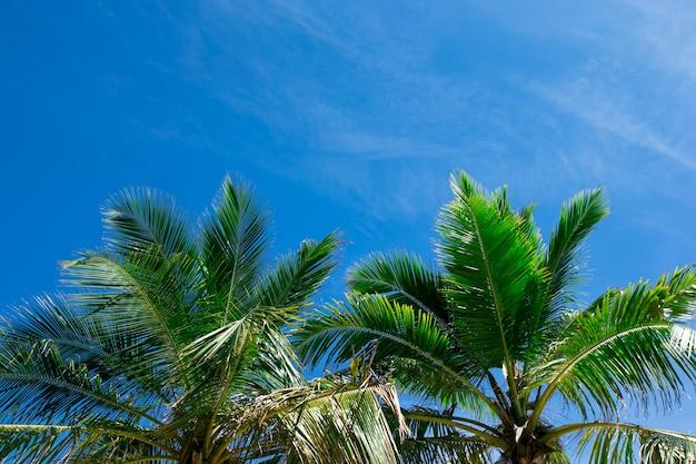 Kokospalmen, schöner tropischer hintergrund