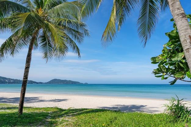 Kokospalmen und türkisfarbenes meer im strand von phuket patong. sommernatururlaub und tropisches strandhintergrundkonzept.