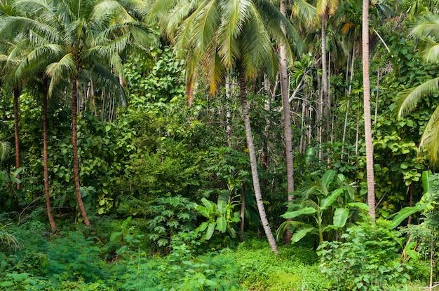 Kokospalmenbäume und grüne pflanzen im tropischen wald auf der insel in thailand