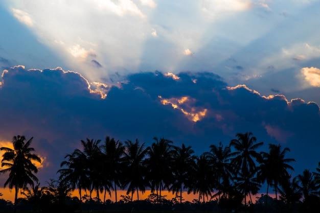 Kokospalmenschattenbild auf buntem sonnenuntergang des paradieses