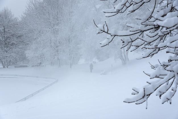 Kolomenskoje-park, winterlandschaftsbäume im schnee