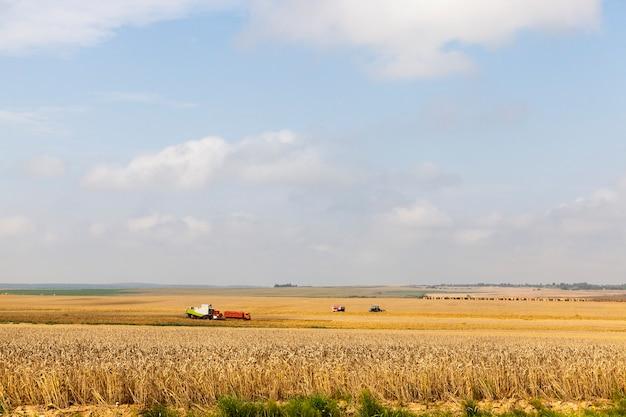 Kombinieren sie mähdrescher und andere landwirtschaftliche maschinen, die im sommer weizen ernten, landschaft