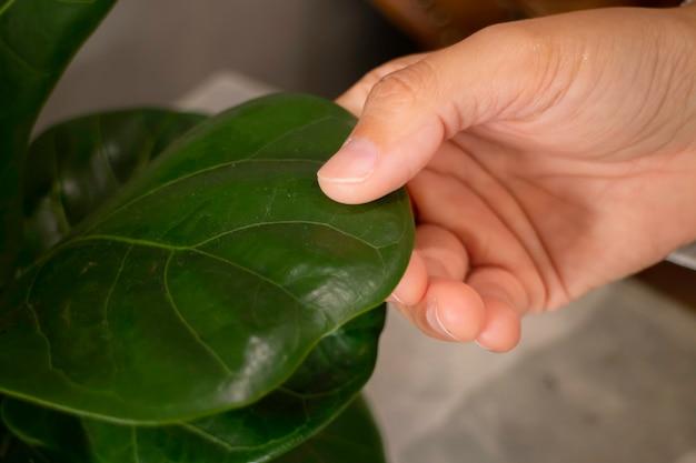 Komfortabler innenraum mit grüner pflanze