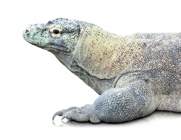Komodo drache oder varanus komodoensis