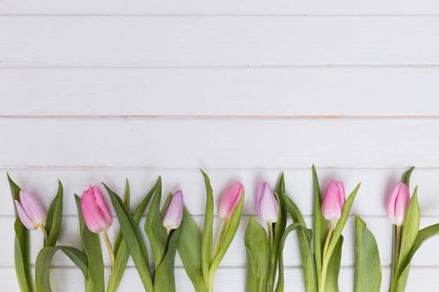 Komponierte zarte tulpen in der reihe