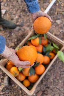Komposition mit kiste voller orangen