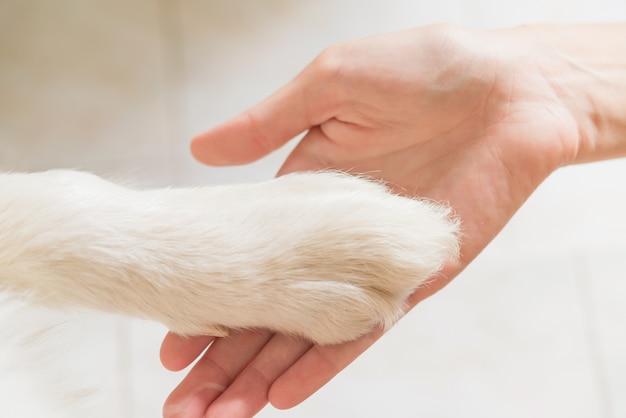 Kontakt zwischen hundepfote und menschlicher hand, geste der zuneigung