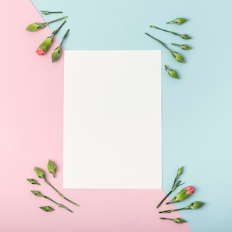 Kontrastierter hintergrund mit leeren weißbuch- und gartennelkenblumen