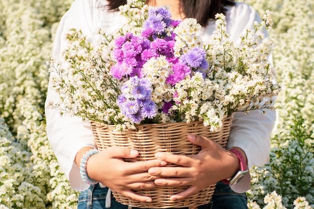 Konzentrieren sie sich auf violette margaretenblüten in margaretenblume im garten
