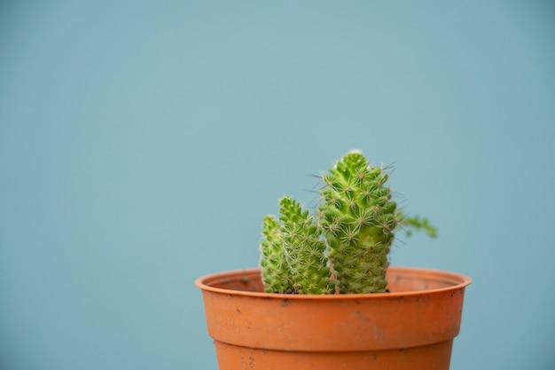 Konzentrieren sie sich kleine tasse kaktus