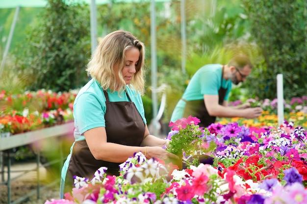 Konzentrierte frau, die mit blumen in töpfen im gewächshaus arbeitet. professionelle gärtner in schürzen, die sich um blühende pflanzen im garten kümmern. selektiver fokus. gartenarbeit und sommerkonzept
