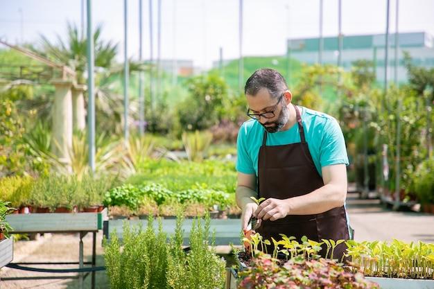 Konzentrierter professioneller gärtner, der sprossen umtopft, schaufel verwendet und erde gräbt. vorderansicht, niedriger winkel. gartenarbeit, botanik, anbaukonzept.