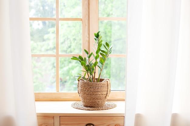 Konzept der hausgartenarbeit. zamioculcas im blumentopf auf der fensterbank. zimmerpflanzen auf der fensterbank. grüne zimmerpflanzen in einem topf auf fensterbrett zu hause. hygge. boho. rustikal. skandinavisch. platz für text