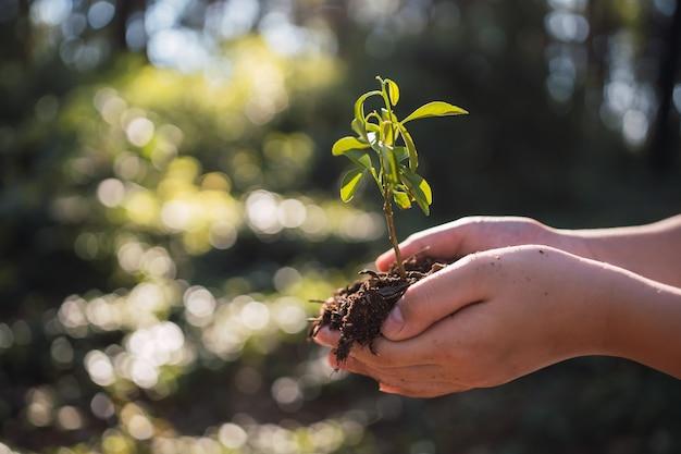 Konzept der umweltökologie - hand hält einen kleinen baum zum pflanzen.