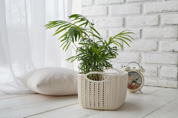 Konzept der werbung für domestizierte pflanzen