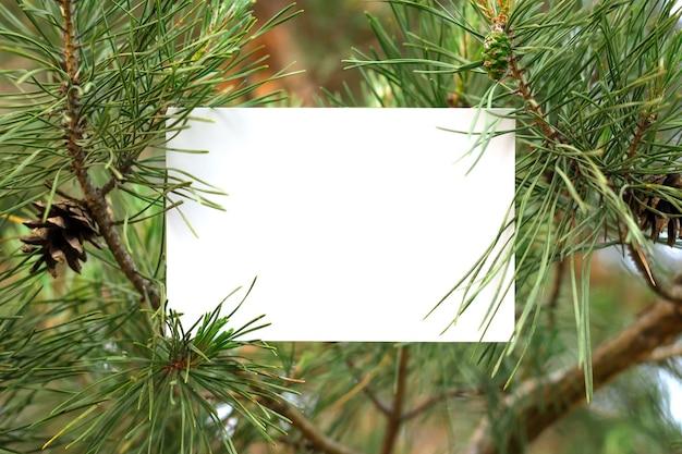 Konzept des kiefernwaldes. weißes isoliertes papier auf kiefer im wald