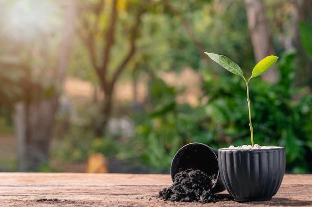 Konzept des pflanzens eines baumes