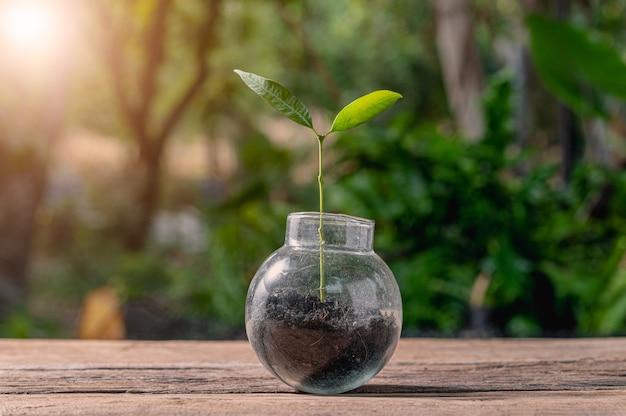Konzept des pflanzens eines liebesbaums