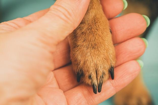 Konzept des vertrauens und der freundschaft zwischen tierhalter und hund. hundepfote und menschliche handfläche.