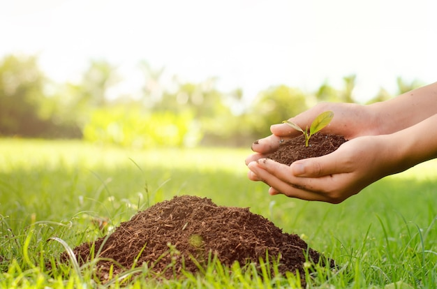 Konzept des weltumwelttages: bäume pflanzen, um die welt mit menschlichen händen zu retten, die kleine bäume über unscharfem landwirtschaftlichen feldhintergrund halten