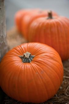 Konzept für herbst traditionellen feiertag halloween