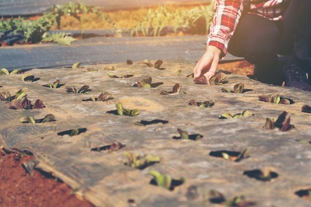 Konzept für intelligente landwirte und pflanzenprodukte; weiblicher gärtner, der frisch pflanzen im bauernhof prüft