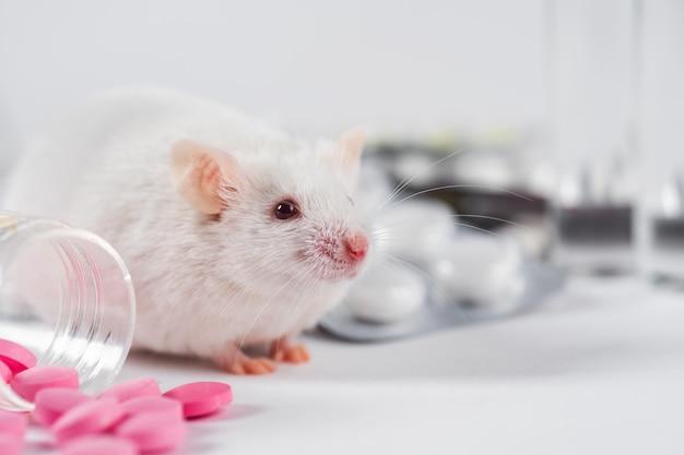 Konzept zum testen neuer arzneimittel oder kosmetika an mäusen und labortieren