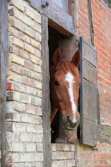 Kopf des pferdes in seiner box
