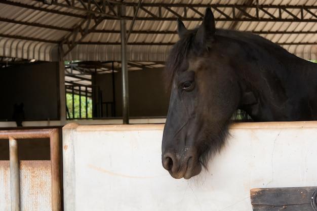 Kopfporträt des schwarzen pferdes im stall