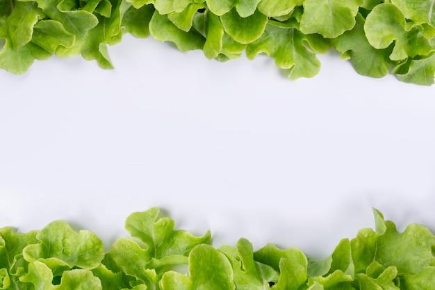 Kopfsalat, der auf ein weiß gesetzt wird.