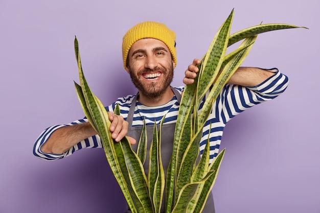 Kopfschuss eines fröhlichen gärtners, der mit einer großen topfschlangenpflanze aufwirft