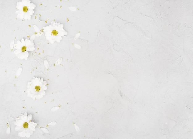 Kopieren sie raumfrühlingsgänseblümchenblumen und -blumenblätter