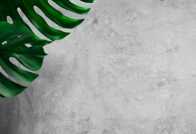 Kopieren sie space leaf monstera auf grauem steinmauerhintergrund
