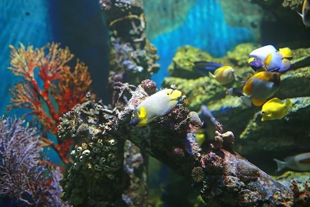 Koralle und fische im aquariumbecken