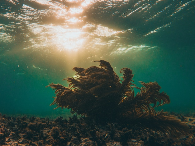 Koralle unterwasser mit sonnenuntergang