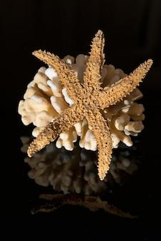 Korallen auf schwarzem reflektierendem hintergrund