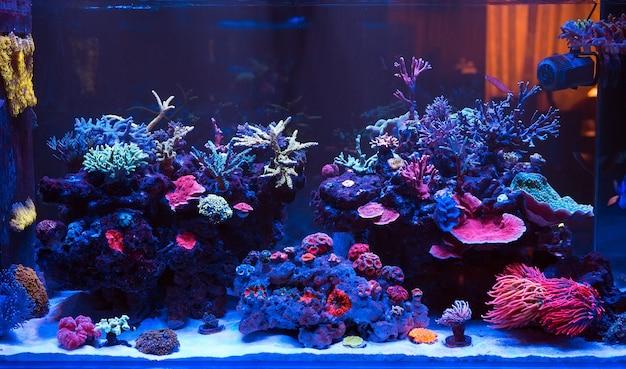 Korallen in einem marine aquarium.