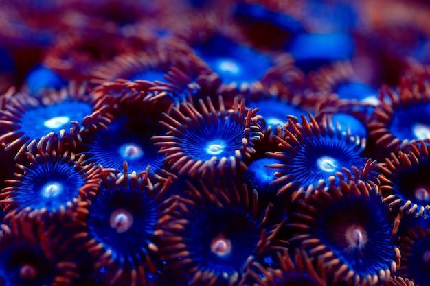 Korallen in einem meerwasseraquarium.