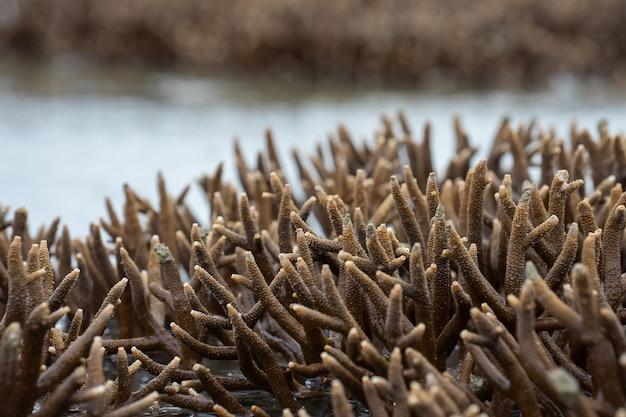 Korallen wachsen in der nähe einer insel außerhalb des wassers