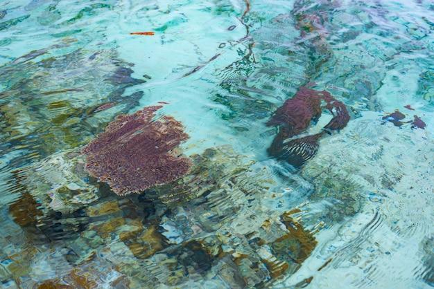 Korallenriff nah oben im transparenten wasser des türkises von tropischem meer.