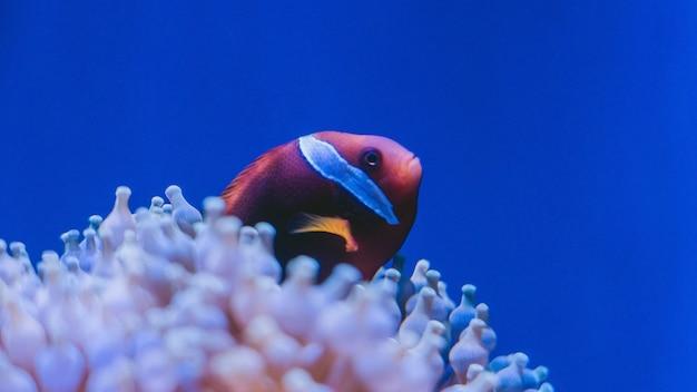 Korallenriff unterwasser / lagune mit korallen, unterwasserlandschaft, schnorchelausflug