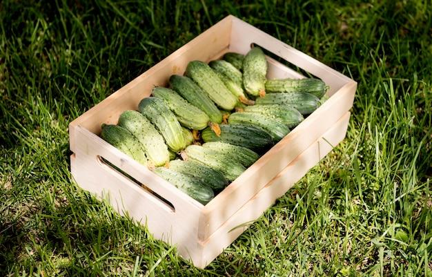 Korb gefüllt mit gurken auf dem gras