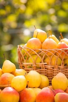 Korb mit gelben birnen im herbst draußen. konzept für gesunde ernährung