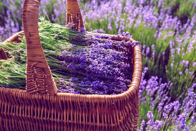 Korb mit lavendel auf dem gebiet